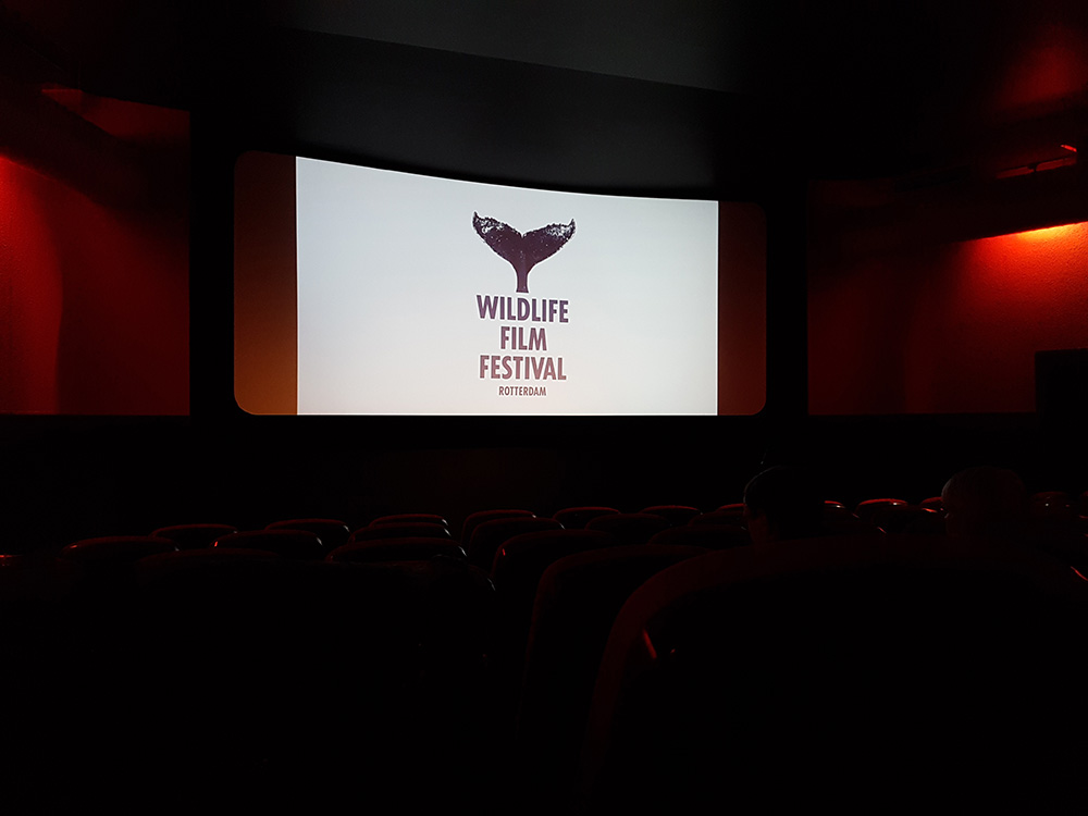 The cinema screens at WFFR just before a screening