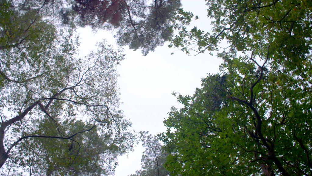 Filming in Delamere Forest for Delamere Logs