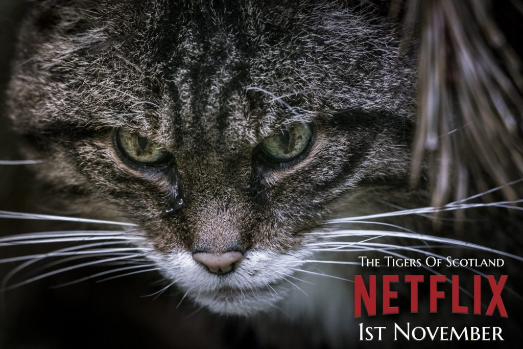 The Tigers Of Scotland - available on Netflix from 1st November