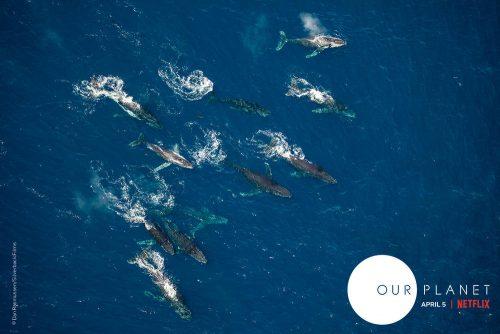 our planet netflix press images - wildlife filmmaking-wild films